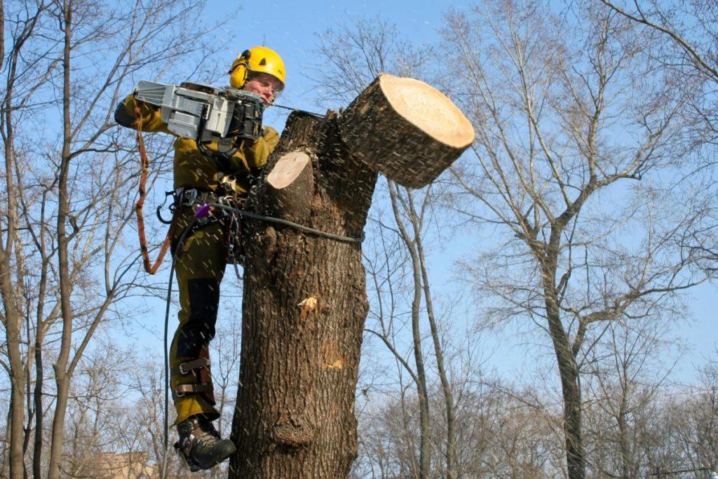 смета на опиловку деревьев образец - фото 4